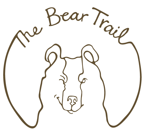 family days out devon things to do with kids adventure park the bear trail - Outline Of A Bear